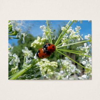 luck beetle