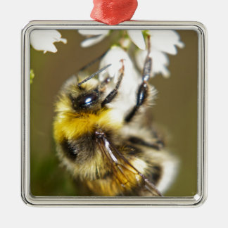 Lucky Bee Silver-Colored Square Decoration