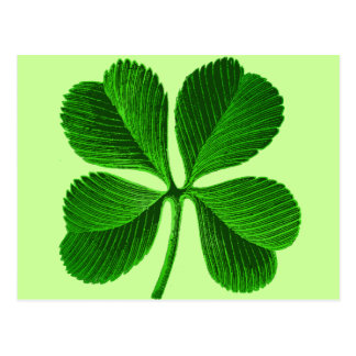 Lucky Four Leaf Clover Postcard