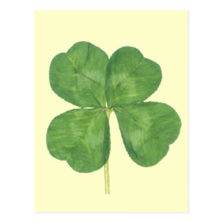 Lucky Four-Leaf Clover Shamrock Postcard