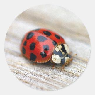 Lucky Ladybug Stickers