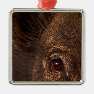 Lucky Pig Silver-Colored Square Decoration