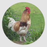 Lucky rooster round stickers