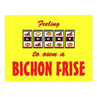Lucky to Own a Bichon Frise Fun Dog Design Postcard