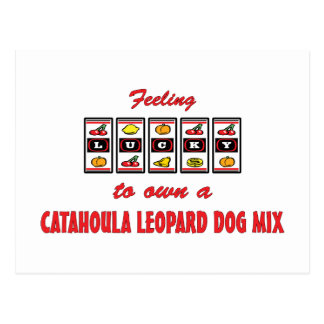 Lucky to Own a Catahoula Leopard Dog Mix Postcard