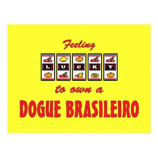 Lucky to Own a Dogue Brasileiro Fun Dog Design Postcard