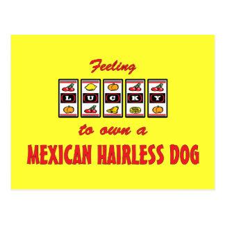 Lucky to Own a Mexican Hairless Dog Fun Dog Design Postcard
