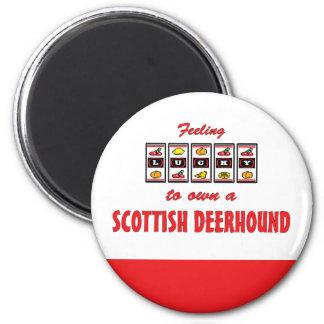Lucky to Own a Scottish Deerhound Fun Dog Design Refrigerator Magnets