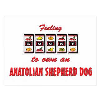 Lucky to Own an Anatolian Shepherd Dog Fun Design Postcards