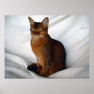Lucy Dawn Ruddy Abyssinian Cat Print