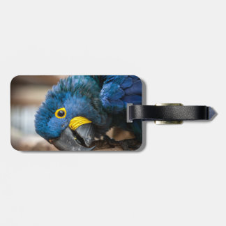 Luggage tag label cute blue Hyacinth Macaw parrot