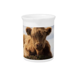 Luing cow on the Isle of Islay, Scotland Pitcher