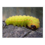 Luna Caterpillar Postcard