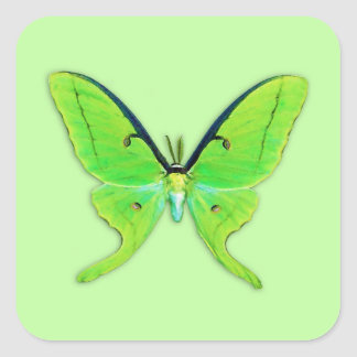 Luna moth on a pale green background square stickers