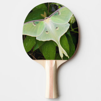 Luna Moth on Carnaby Clematis Ping Pong Paddle