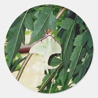 Luna Moth Round Stickers