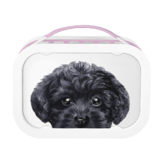 Lunch box with Black toy poodle