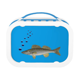 Lunch box with fish and cyan backgroud