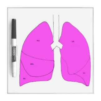 Lung anatomy dry erase board