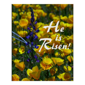 Lupin & Poppies He is Risen! Print