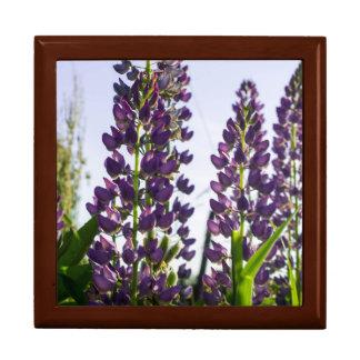 Lupin purple gift box