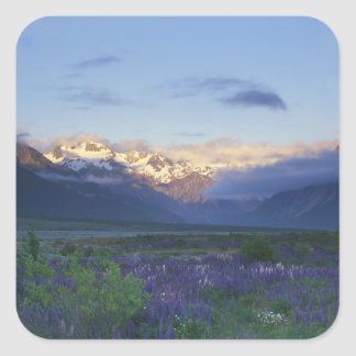 Lupine and the Main Divide, Arthur's Pass, South Square Sticker