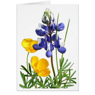 Lupine Poppies Note Card