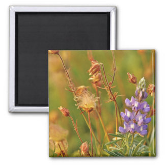Lupine & Prairie Smoke wildflowers in Montana Magnet