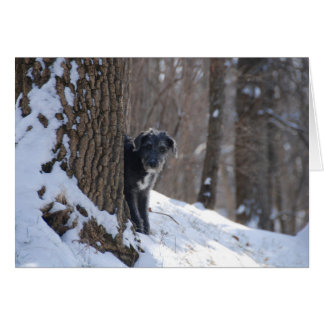 Lurcher Behind A Tree - Greeting Cards