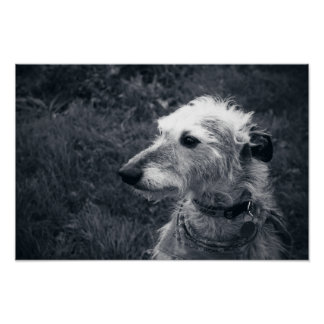 Lurcher I Posters