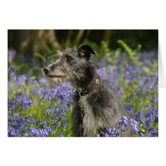 Lurcher in the Bluebells Greetings Card