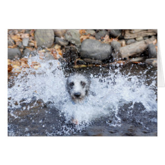 Lurcher Swimming Card