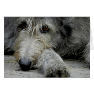 Lurcher Up Close - Card