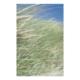 Lush Beach Grass Full Color Flyer