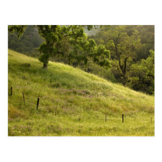 Lush Dewy Field, California Postcard