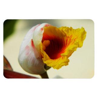 Lush exotic tropical flower magnet