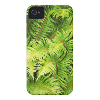 Lush green fern leaves iPhone 4 cases