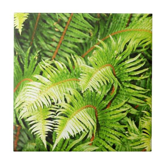 Lush green fern leaves tile