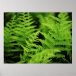 Lush Green Ferns