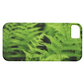 Lush Green Ferns iPhone 5 Cover