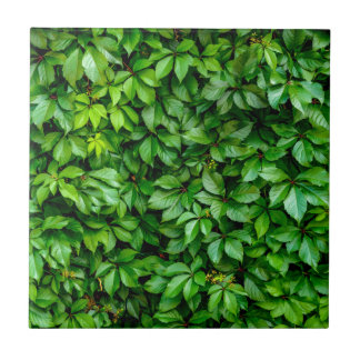 Lush Green Hedge Background Small Square Tile
