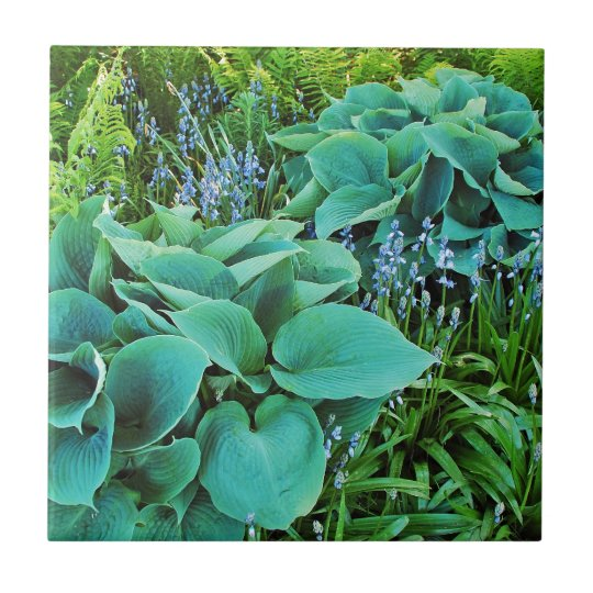 Lush green hosta and fern plant garden small