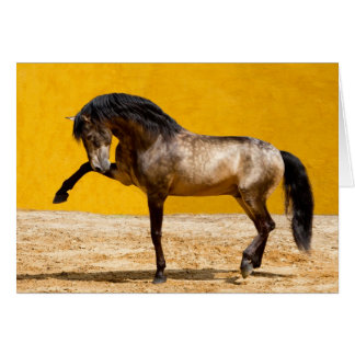 Lusitano Stallion Horse Greeting Card