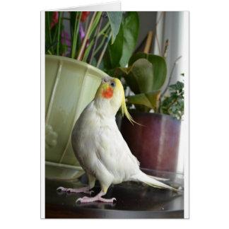 Lutino Cockatiel Card