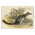 Lydekker - Banded Ant-Eater - Numbat Card