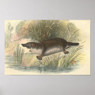 Lydekker - Platypus Portfolio Poster