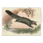 Lydekker - Squirrel Flying Phalanger/Possum Greeting Card