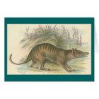 Lydekker - Thylacine - Tasmanian Tiger Card