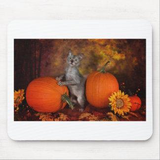 Lykoi Kitty & Pumpkins Mousepad