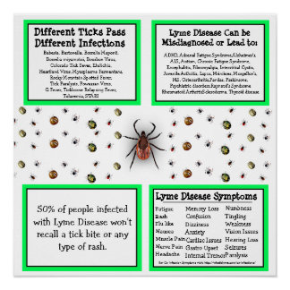 Lyme disease Information Poster